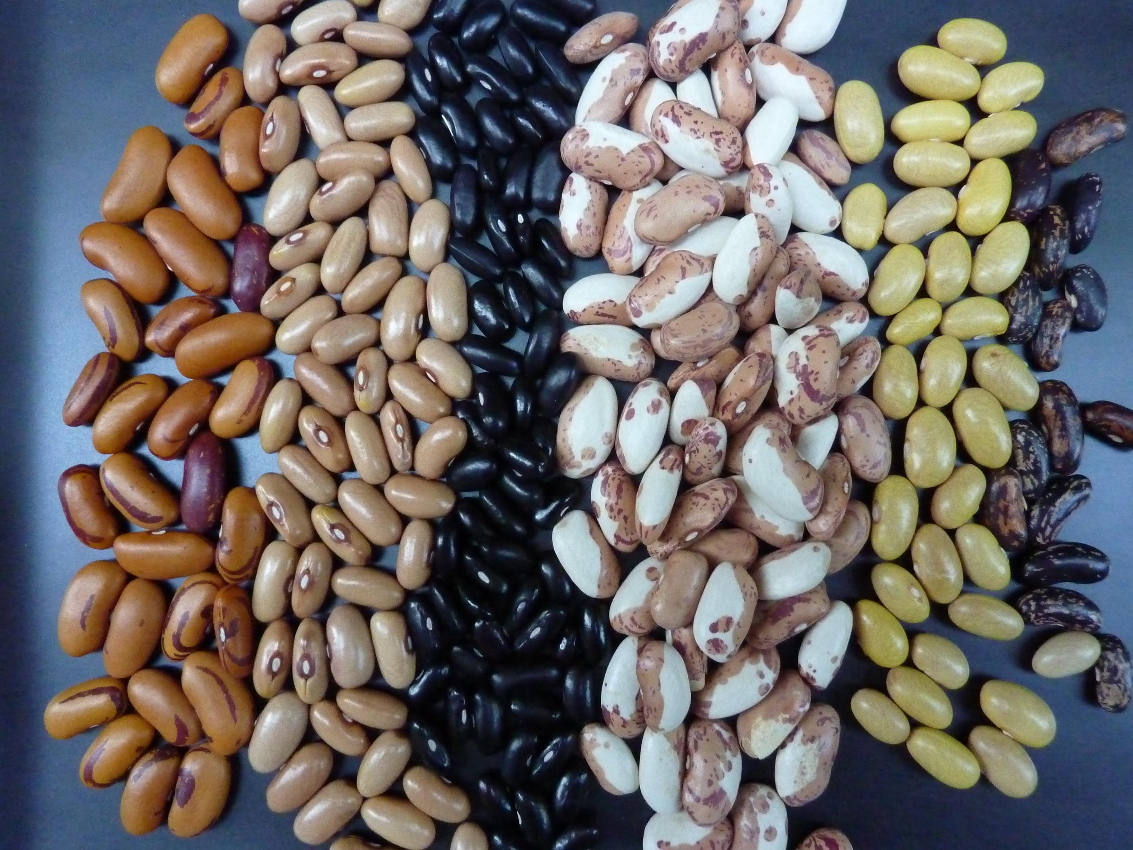 beans Archives  tangent ramblings