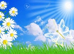 14873883-Fleurs-des-champs-papillon-et-le-ciel-bleu-Banque-d'images - Copie