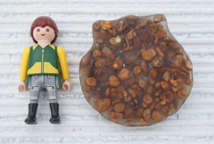 coquille st jacques 1 face plate pépite de cuivre réf:pc11 60€