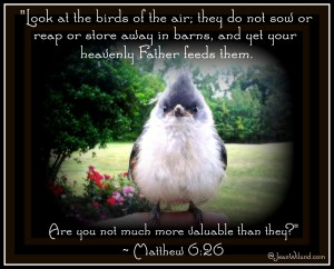 "Praise Picture: Need encouragement in hard times? ""Look at the birds of the air!"" Matthew 6:26"