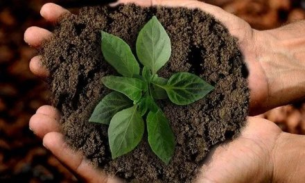 Comment faire ses graines et ses semences potagères soi-même pour le jardin ?