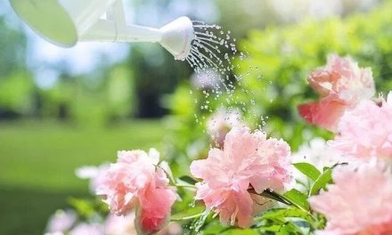 Comment arroser ses plantes avec ses eaux usées ?