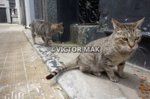 Recoletta Cemetery cats: El Presidente and Vice Presidente.