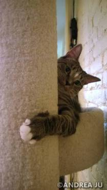 A sassy kitty.