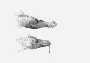 Suchomimus et Allosaurus