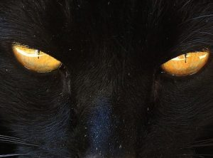 Black cat's wisdom eyes via free image site