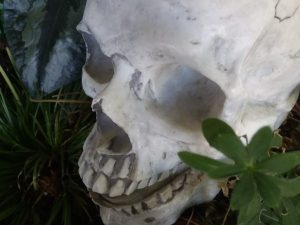 Human skull (fake) sitting among greenery
