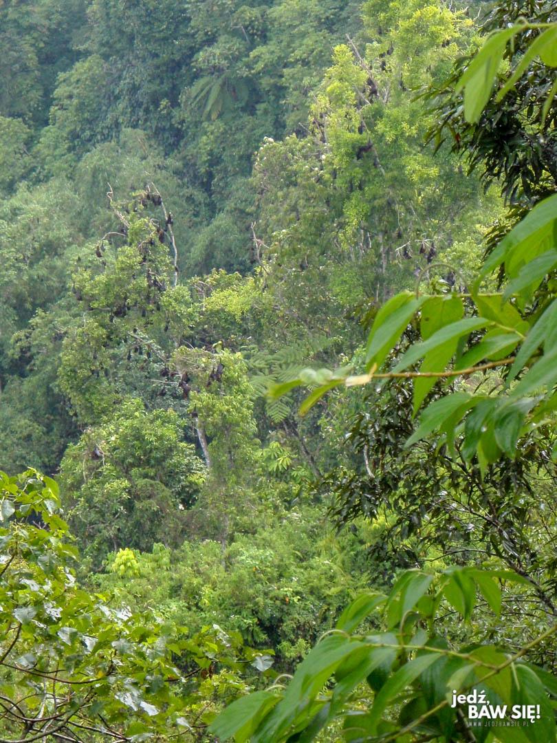 Bukkitingi - siedlisko Rudawek