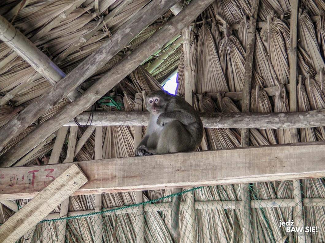 Cat Ba - Monkey Island