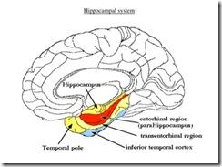 Hippocampal image