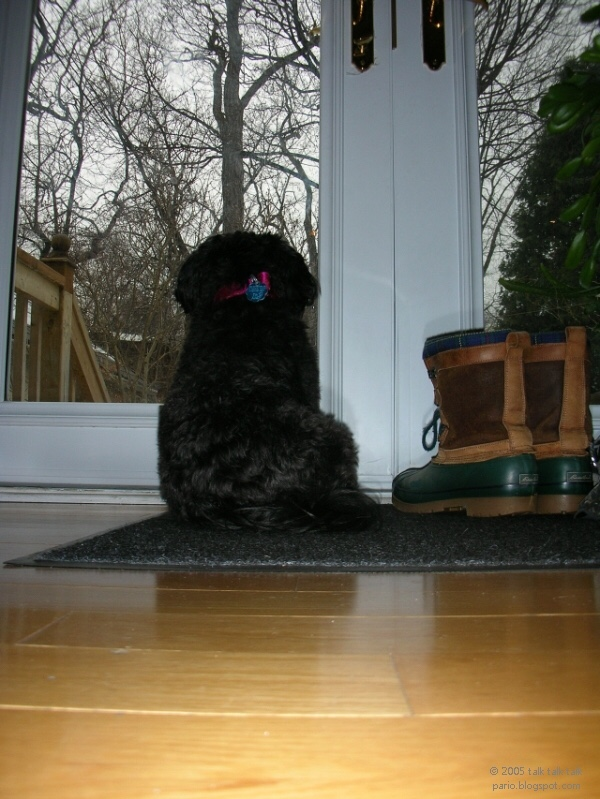 Black dog sitting and looking out window in door with two boots beside them.