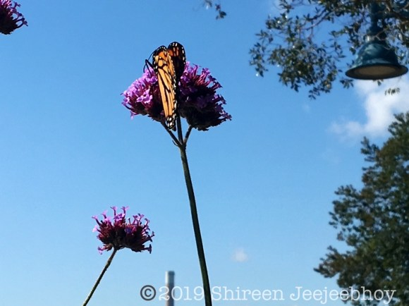 Butterfly on a pink flower against blue sky