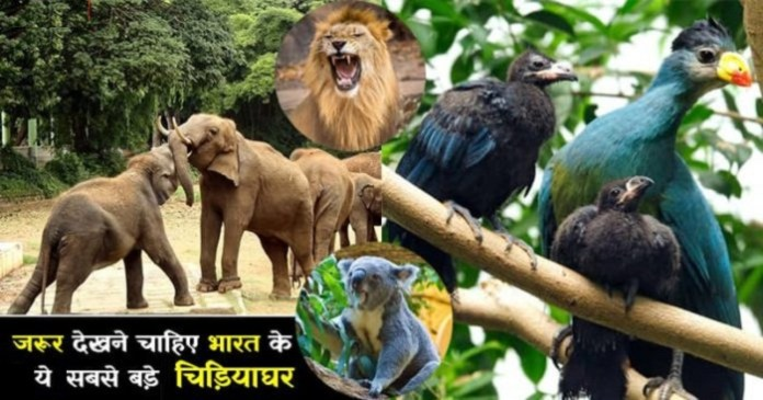 Top Biggest Zoos In India