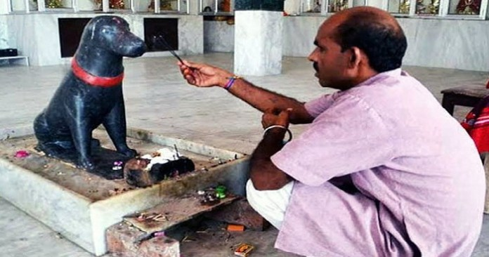 People Worship Dog Temple Chhattisgarh
