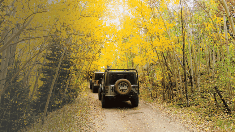 Jeep Trail in Fall With Golden Leaves
