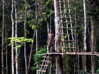 korowai tree house people