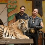 tiger at King Richard's faire in Carver Massachusetts