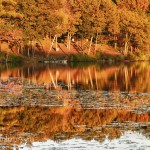 2005 fall color in southern New Hampshire. Late afternoon sun and autumn pond color
