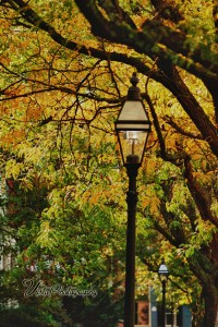 Fall color is found along Chestnut Street in Salem MA