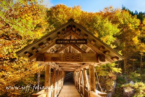The Pine Sentinel Covered Bridge from the end of the walkway. Trees rise above it in golden yellow and green in the dawns early light.