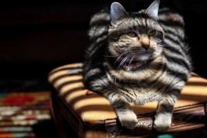 Houston Photographer – Cat