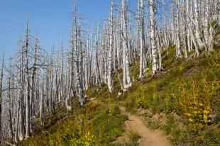 2018-09-05-Mt-Hood-Oregon-167