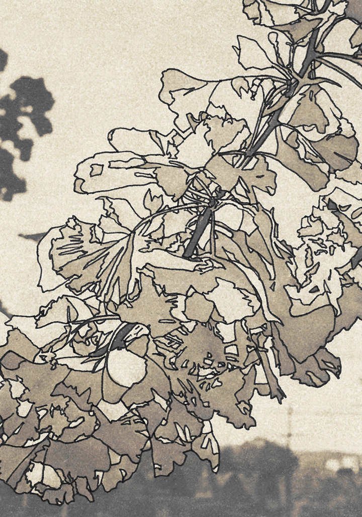 art, jeffcoat art, drawing, ink, photography, nature, gingko tree, leaves, Portland, Oregon, travel, outdoors, sepia, artwork, print, art to buy