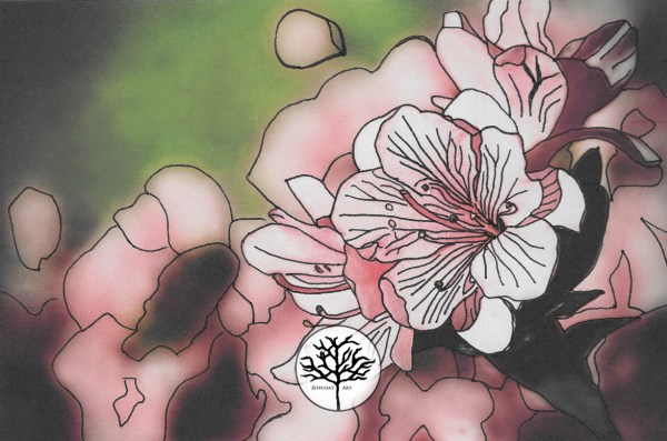 inking of pink azaleas by Jeffcoat Art