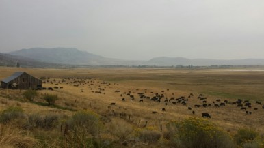 holistic planned grazing, Springs Ranch, Jefferson Center for Holistic Management