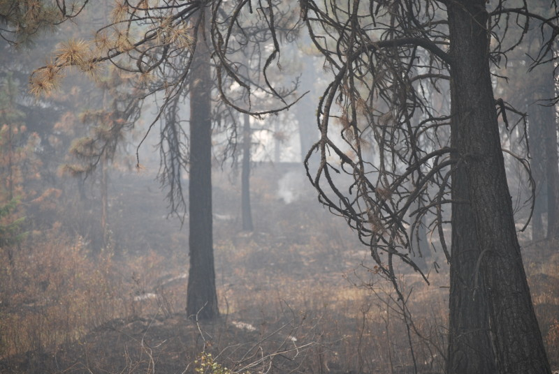 Grizzly Bear Complex fire, Troy, Oregon, Holistic Planned Grazing, fire recovery planning