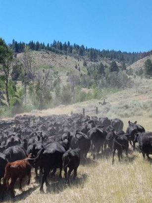 holistic management, holistic planned grazing, Springs Ranch, Jefferson Center