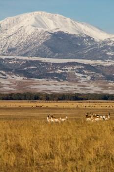 Crazy Mountains_20121007_016