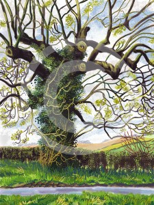 ipad drawing, Spring Tree, Oulston, North Yorkshire