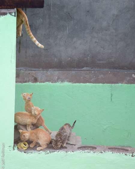 kitty-mom