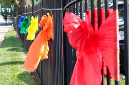 Rain-bows on the east fence.