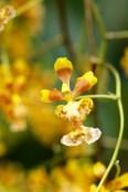 orchids17-25