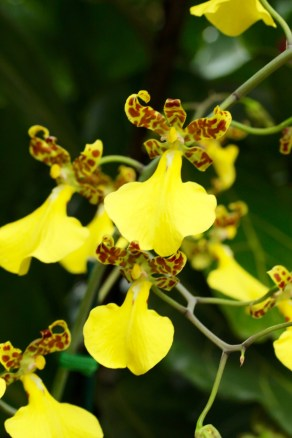 orchids17-3