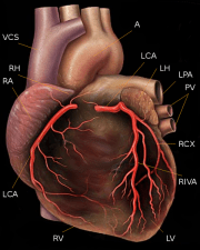 Bioidentical Hormone Estrogen Prevents Heart Disease