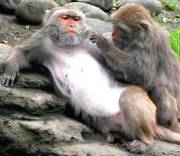 Don't Monkey With My Hormones