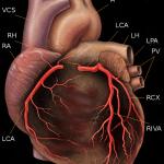 Estrogen Prevents Heart Disease Bioidentical Hormones