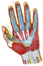 Vitamin B6 Pyridoxine for Trigger Finger