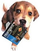 heartgard_Dog_canine_ivermectin