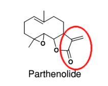 parthenolide jeffrey dach md