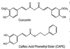 CAPE_Curcumin_Blocks_PAK1_anti_cancer