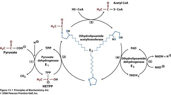 pyruvate dehydrogenase alpha lipoic acid