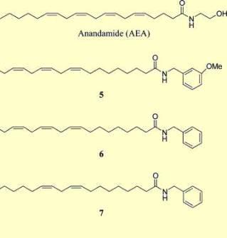 Endocannabinoid Modulating Alkylamides Lepidium meyenii MACA Zsanett Hajdu J Nat Products 2014