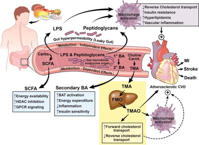 LPS atherosclerosis Brown 2015