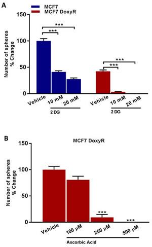 Ascorbic Acid Vitamin C and Doxycycline Kills Cancer Stem Cells