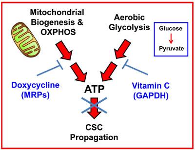 Doxycycline anti inflamatory