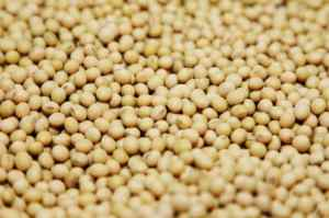 USA-SOYBEANS-CHINA-Monsanto_Round Up Ready